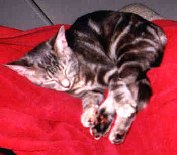 sleepykitty.jpg (80283 bytes)